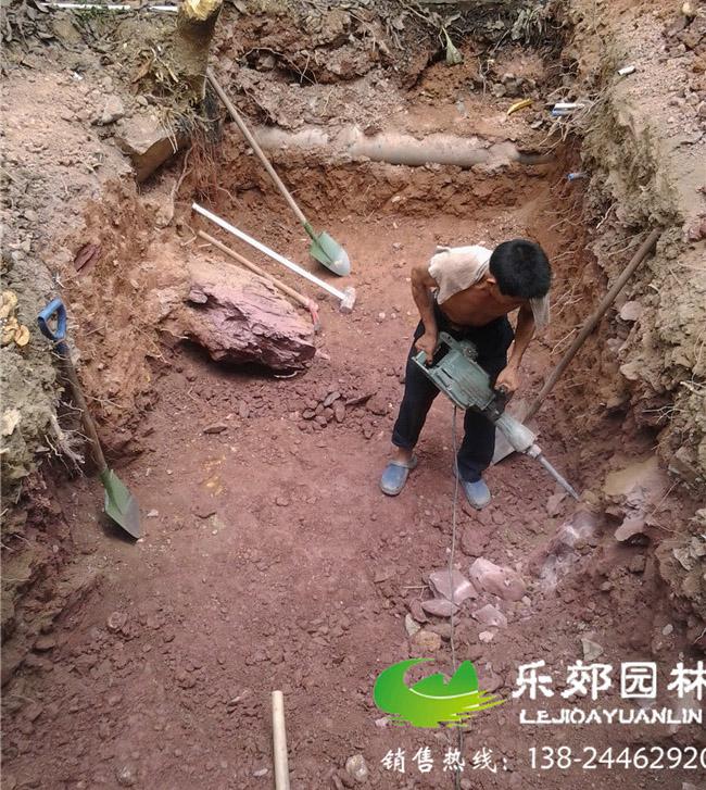 挖鱼池:一楼庭院鱼池一般会选择往地下挖的方式,也有一半在地上,一半